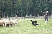 Sheep_182