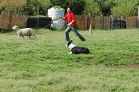 Sheep_239