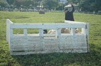 Sheep_287